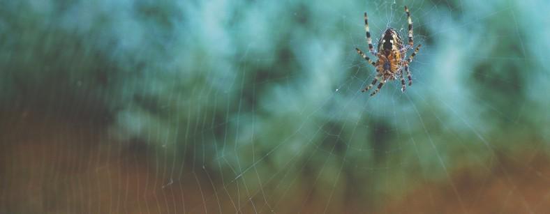 arachnid-1853336_1920